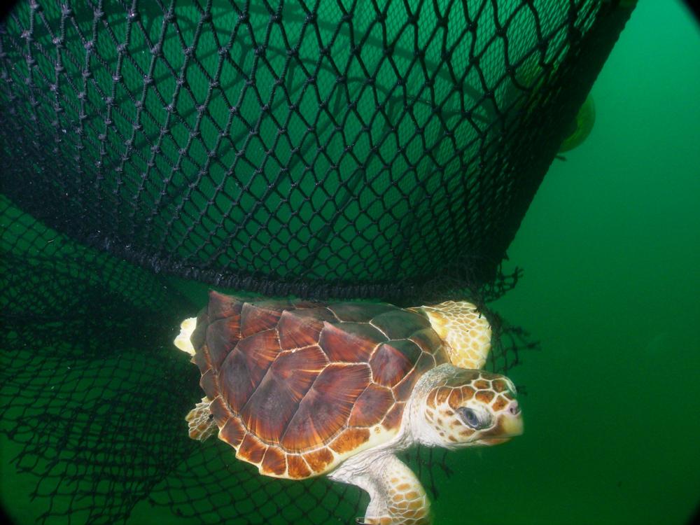 fishing net escape hatch